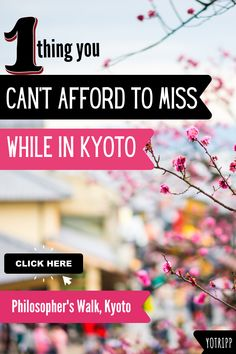 There are many place to go to and things to see in Kyoto, but there's 1 thing you absolutely cannot afford to miss in this historic geisha town. Take the Philosopher's Walk in Kyoto. Visit Nazenji temple, philiopsher's stone, shrines, sakura and even a manga museum along the way. #kyoto #japan #geisha #philosopherswalk #sakura #cherryblossom #visitkyoto #visitjapan Cherry Tree Varieties, Ginkakuji, Famous Philosophers, Sakura Cherry Blossom, Short Poems, Visit Japan, Kyoto Japan, Along The Way, Geisha