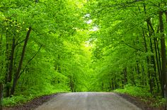 Awenda Provincial Park in May - full of lime green forest & an understory of trilliums