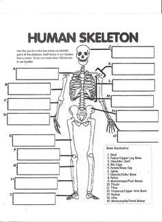 Label the Skeleton Worksheet - Homeschool Helper ...