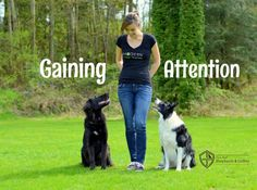 Gaining your herding breed dog's attention will take practice, patience and a lot of hard work, but Guild Evangelist Kris Crestejo tells us the results will be well worth it in the long run. Check out her detailed steps to gaining your dog Dog Training Tips, Training Pads, Training Videos, Training Equipment, Leash Training, Agility Training, Training Schedule, Toilet Training, Training Collar
