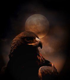 Black eagle by dark--shepherd on DeviantArt Black Eagle, Golden Eagle, Look At The Moon, Apex Predator, Red Moon, Birds Of Prey, Beautiful World, The Darkest, Animals