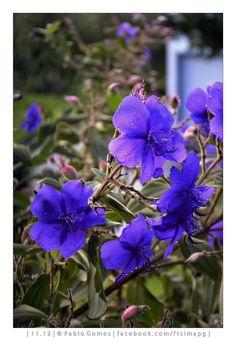 [2012 - Santana - Madeira - Portugal] #fotografias #flor #flores #flower #flowers