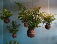 Kokedama Ball String Garden | String Gardens: Canviando perspectivas | Growing Projects