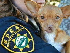 SPCA Officers Help Keep Animals Safe