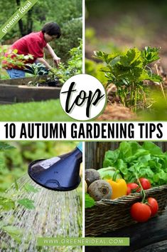 Autumn in the garden is a brilliant distraction from the approaching chill (Winter)! | Gardening Tips | Gardening Tips For Beginner | Autumn Gardening Tips | 10 Best Tips For Gardening | Autumn Gardening Tips For Beginner | What To Plant In Autumn | How To Make Your Garden Bloom | How To Prepare Your Garden For Autumn | How To Plant, Water, Prepare For Autumn Gardening | #gardening #gardeningtips #gardens #autumn #plants #foods #fruits #vegetables #tips #Fall #FallGardening #Sustainablity