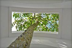 contemplatorium - love tree by rob sweere