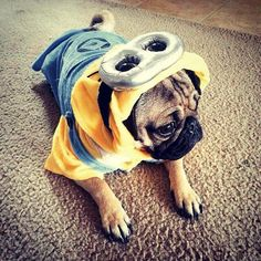 A Minion & Minion dog outfit DIY | DIY dog clothes made by me | Pinterest | Dog