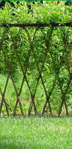 Would love to do this as a living fence behind the house, use climbing roses, hops and other pretty climbing flowers to make it prettier