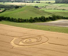 Crop Circle August 20 2012, Woodborough Rd, Wiltshire