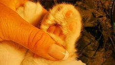 Algo nos une. I love you Tintin Ferret, Love, Amor, Ferrets, European Polecat