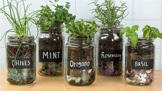 Make an adorable herb garden with old glass jars - # . Make an adorable herb garden with old glass jars - # adorable # Glass vessels Mason Jar Herbs, Mason Jar Herb Garden, Herb Garden In Kitchen, Diy Herb Garden, Kitchen Herbs, Herbs Garden, Mason Jar Planter, Small Indoor Herb Garden Ideas, Plants In Mason Jars