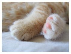 Baby Paws by =ChrissieCool on deviantART on vi.sualize.us