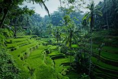 Canggu to Ubud Day Trip, Check Out The Updated Price Here! Ipoh, Places To Travel, Travel Destinations, Places To Visit, Machu Picchu, Voyage Costa Rica, Hostels, Vietnam, Temple