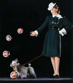 Poodle Circus dog