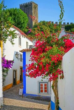 Bougainvillea, Places To Travel, Places To Visit, Pretty Landscapes, Portugal, Andalucia, Greek Islands, Native Plants, Watercolor Illustration