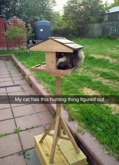 19 Funny Animal Pictures Of The Day #funny #picture