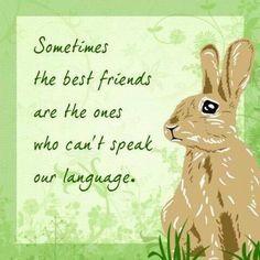 Adorable animals pet rabbit, bunny quotes и bunny. Rabbit Art, Pet Rabbit, Rabbit Life, Bunny Quotes, Pet Quotes, Animal Quotes, Bible Quotes, My Best Friend, Best Friends