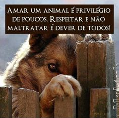 Loving an animal is the privilege of a few. Respecting and not mistreating is everyone's duty.