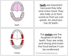Teeth Nomenclature Book (Red) - Describes 7 Parts of the Teeth/Jaw.