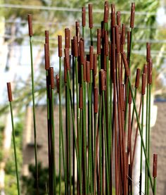 rebar cattails