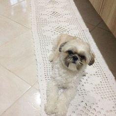 Quem não gosta de um chão limpinho, né Faro? Para deixar os rejuntar limpinhos…