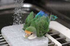 bathing  水浴び