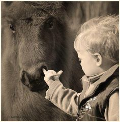 Image Search pictures   #humor #funny #horses #children