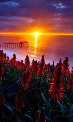 """@anamary2012: ""@WorldSoulAwaken: Scripps Pier, La Jolla, California pic.twitter.com/67mhIz1BWk""Bello amanecer."""