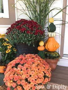 Gourd Topiaries and other fun crafts with quirky gourds!