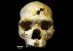 Une étude menée sur un crâne humain vieux de 430.000 ans suggère que l'individu a été intentionnellement tué par un congénère. Si l'hypothèse se voit confirmée, il s'agirait ni plus ni moins du meurtr