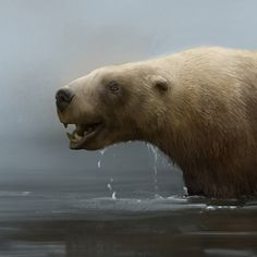Rhamphotheca — Killer bite of the otter-bear. The unusual saber toothed marine bear, Kolponomos.