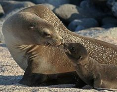 So Cute! This Adorable Sea Lion Mom and Her Baby Share the Sweetest Little Kiss