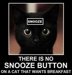 need a snooze button on my cat for Saturday lie-ins….please!