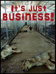 """Overall it is estimated that Romania spent between 25 and 40 million EURO on strays from 2001 until 2008, while their numbers only grew larger. For example, in Brasov, although there were only 4,000 stray dogs in 2001, the dog catchers managed to """"kill"""" about 20,000 in 8 years.ROMANIA KILLS DOGS ONLY BECAUSE OF MONEY!!"""
