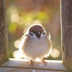 #sparrow