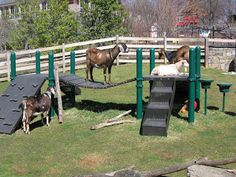 A goat playground?...yes please....Maybe this will keep my goats off of EVERYTHING else!