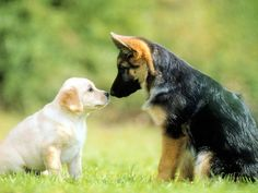 we should take care innocent animals