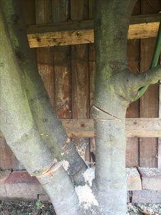 Drill Bit For Tree Stump