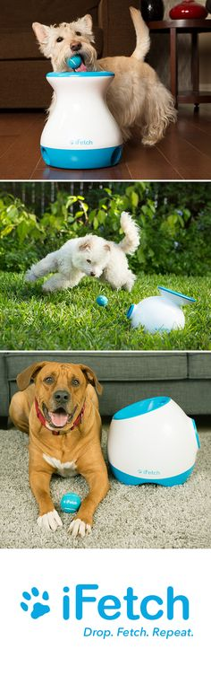 Have a relentless fetcher? Or a breed with boundless energy? Or maybe your clever pup craves brain games? Our interactive pet toy is perfect for your furry family member!
