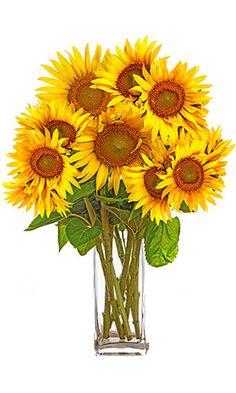 Faites entrer le soleil dans vos intérieurs avec ce ravissant bouquet aux teintes éclatantes. De haute stature, le tournesol vous assure un cadeau sans précédent. Très décoratif et facile d'entretien, ce bouquet avec ses couleurs chaudes réchauffe les cœurs.