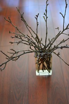 Are you forcing branches this spring?  Why not?  #anestforallseasons    #gardening