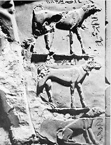 Relieve de los canes de Intef II. Museo Egipcio de El Cairo.