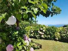 Αμανίτα - Πήλιο Greece, Fruit, Plants, Greece Country, Plant, Planets