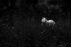 Photo : Christian Houge