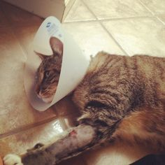 The cone head kitty