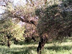 Fab find Land for sale,St George, Corfu, Greece. £50000.