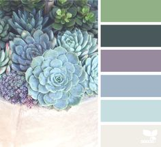 Succulents Archives | Design Seeds