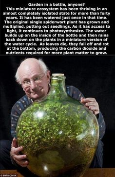 Read this (while admiring the crazy picture haha). How fascinating. I might be on a terrarium kick again..This is something I have never done but I have always wanted to attempt.