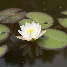 Do you like water gardens? #mossmountainfarm #sharethebounty #gardens #joy