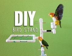 einfache heimwerkerprojekte DIY BIRD STAND: We've been wanting to create a stand for our 2 parrots for a long time and were finally able to create this project! Parrot Stand, Bird Stand, Diy Bird Toys, Diy Toys, Homemade Bird Toys, Bird Play Gym, Budgies, Parrots, Cockatiel Toys